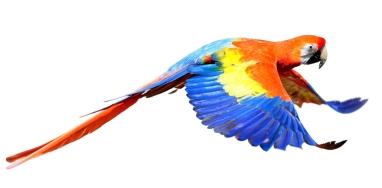 Bird colorful