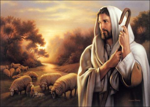 Shepherd 2